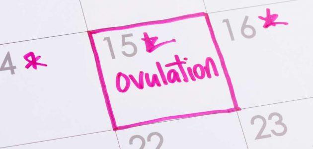 التبويض..الفترة الذهبية لحدوث الحمل